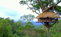 treehouse-gibbon---oriental-colours.jpg