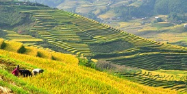 sapa-terraced-rice-fields-vietnam-holiday-Oriental-Colours.jpg